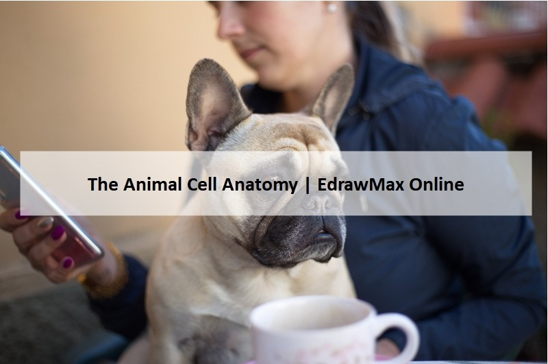 animal cell banner