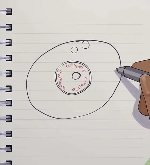 How to Create Animal Cell Diagram from Sketch