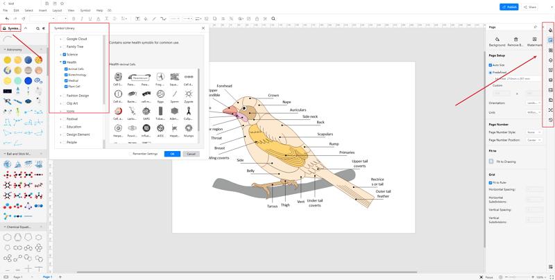 How to Create Bird Anatomy Diagram Online