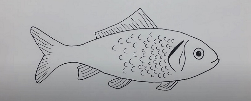 How to Create Fish Anatomy Diagram from Sketch