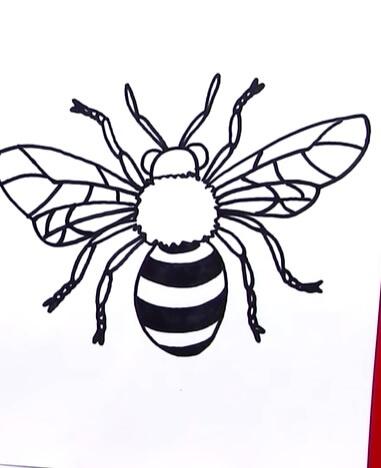How to Create Honeybee Anatomy from Sketch