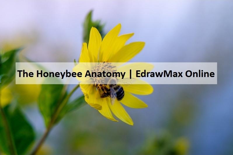 honeybee diagram