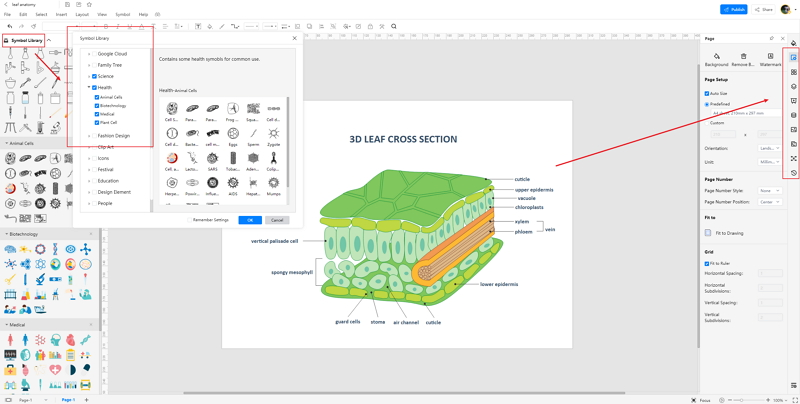How to Create Leaf Cross Section Labeled Diagram Online