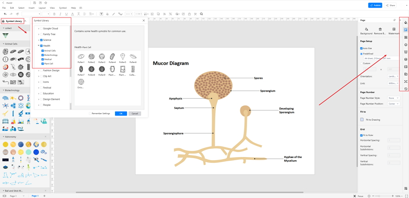 How to Create Mucor Diagram Online