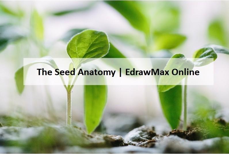 Seed Diagram