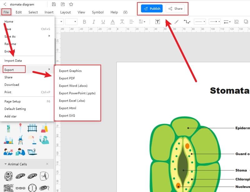 How to Create Stomata Diagram Online