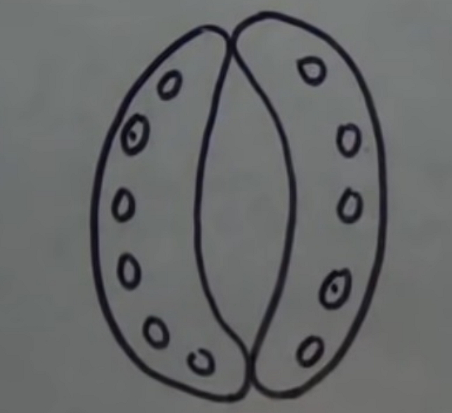 How to Create Stomata Diagram from Sketch