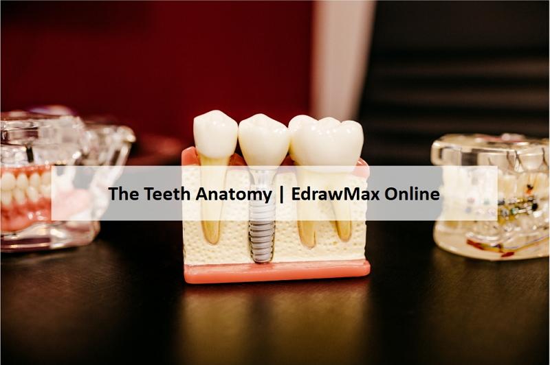 teeth diagram