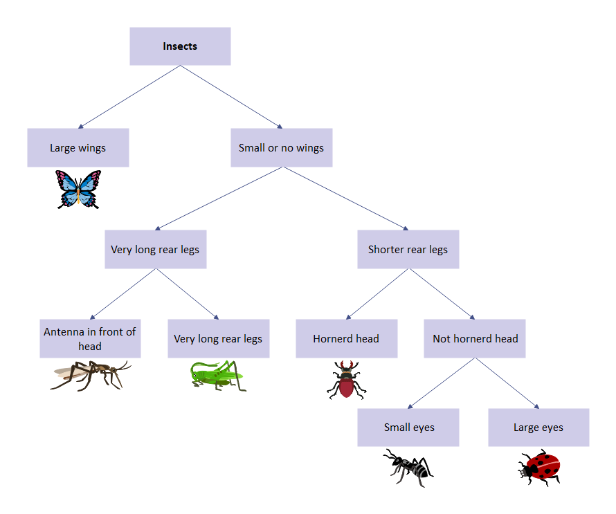Insect Dichotomous Key