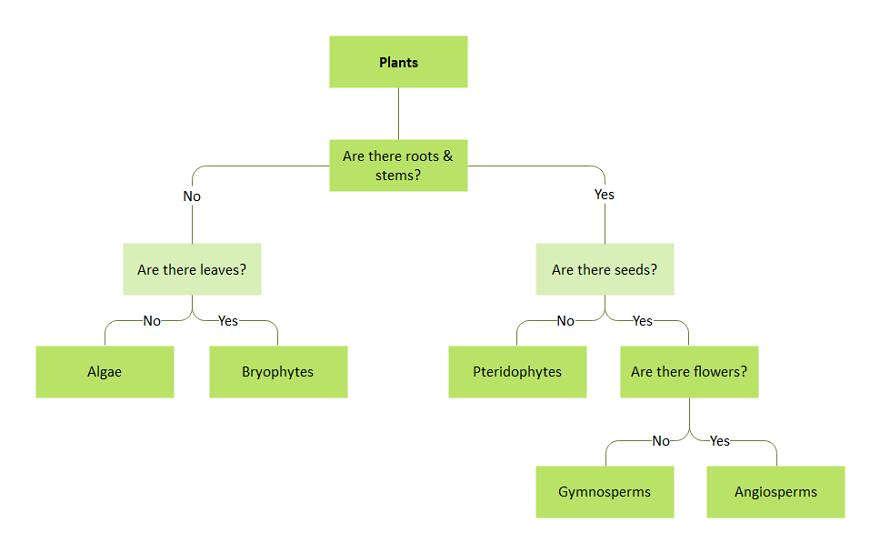 Plant Dichotomous Key