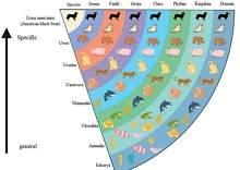 Animals Taxonomy