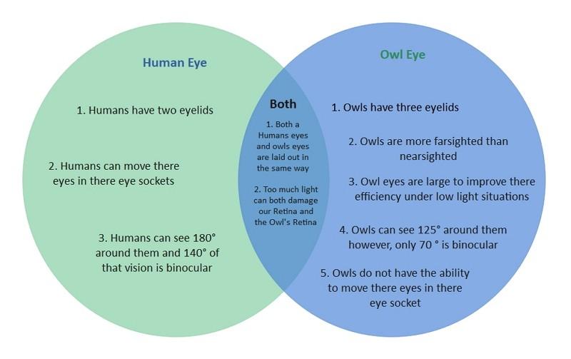 Humain VS Yeux Hibou Venn Diagram