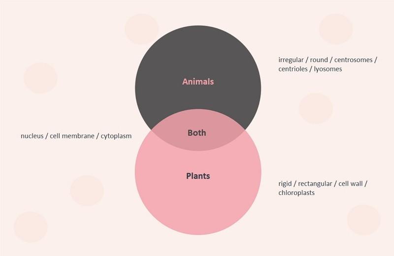 Diagramme de Venn des animaux et des plantes
