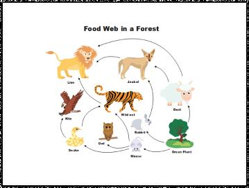 Food Web Diagram