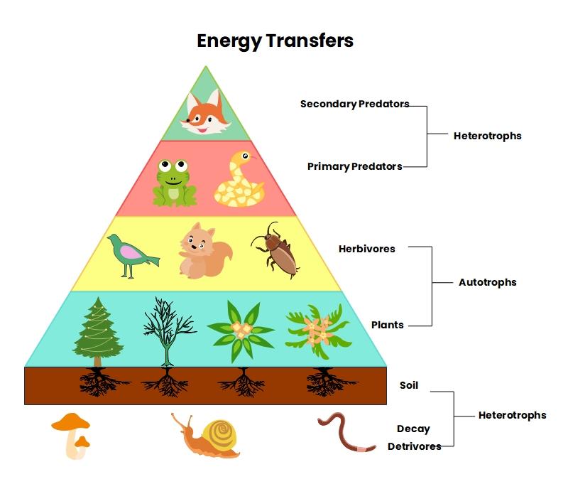 Realistic Energy Pyramid Definition